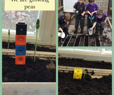 yr science grow peas